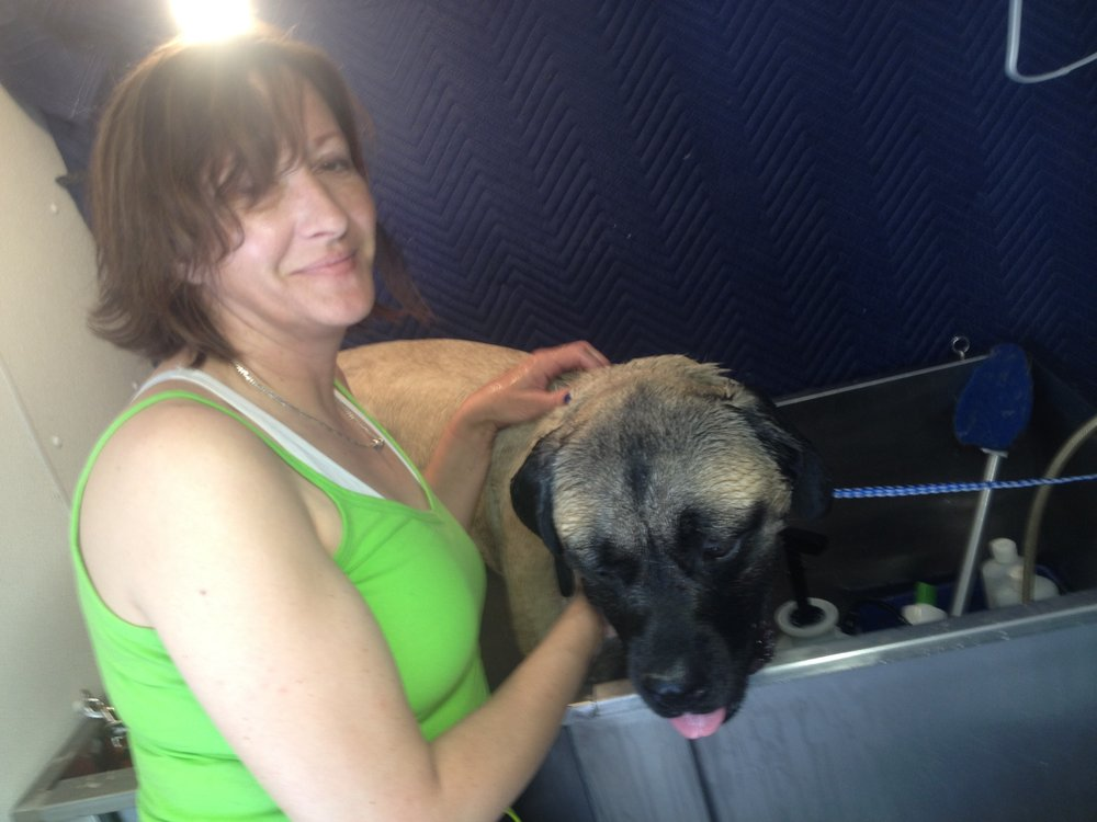 Paragon Dog Grooming School