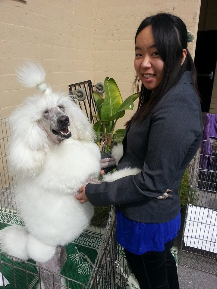 Dog Grooming In West Covina