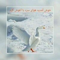 Qadir N.