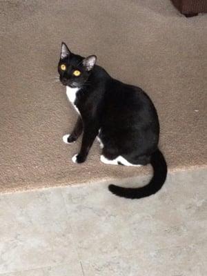 Kitty M.