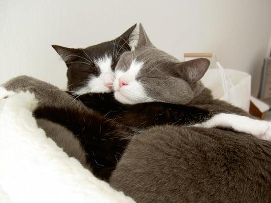 Romeo And Lola K.