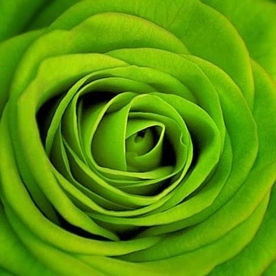 Rose R.