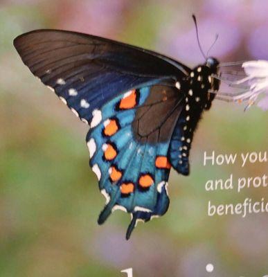 Butterfly M.