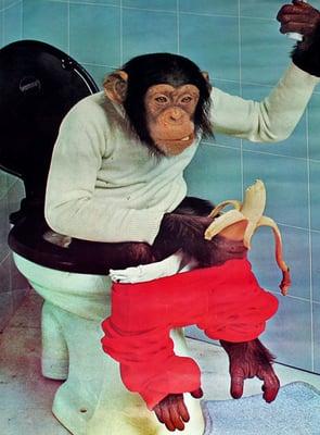 Chimp C.