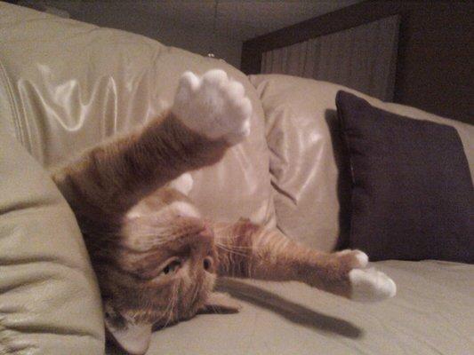 Kitty G.