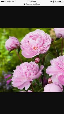 Flower M.