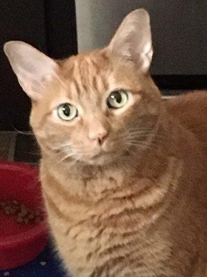 Cat P.