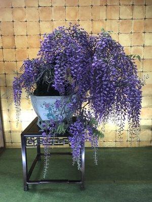 Violet G.